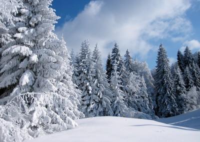 Schneeschuh Wanderung am Fuße des Wetterstein